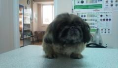 Ветеринарні препарати (2)