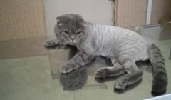 Лікувальні та фізіологічні корми для собак та котів (5)